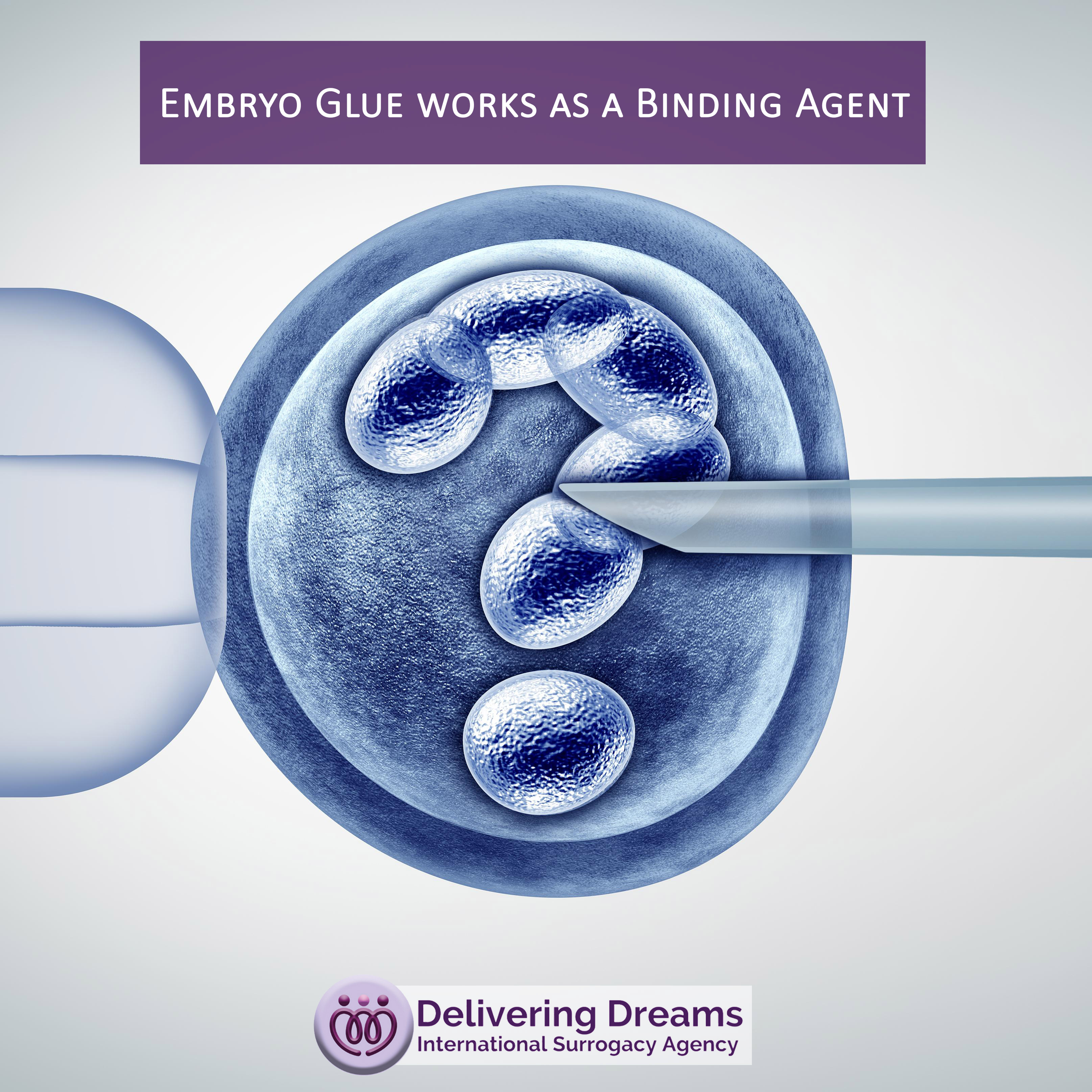 Embryo Glue works as a Binding Agent