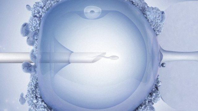 Europeans Look to Ukraine for High Quality Affordable IVF Treatments